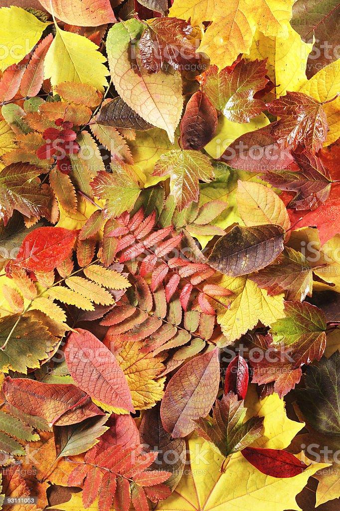 Autumn leaves - Royalty-free Arka planlar Stok görsel