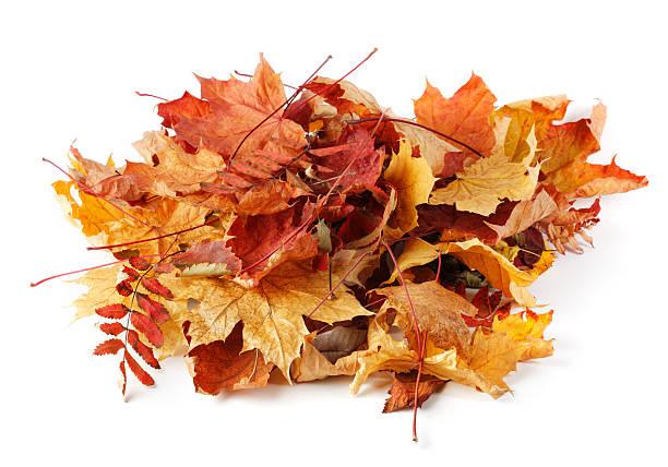 Autumn leaves stok fotoğrafı