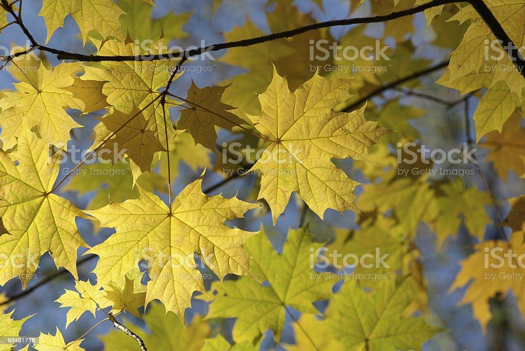 가을 낙엽 - 로열티 프리 0명 스톡 사진