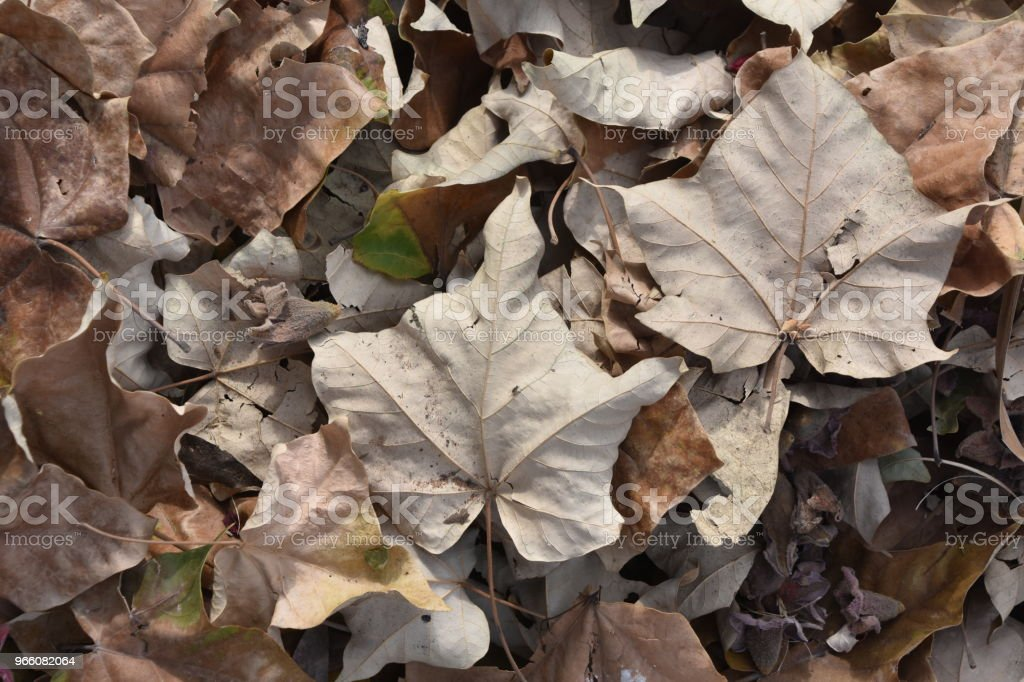 Herfstbladeren - Royalty-free Abstract Stockfoto