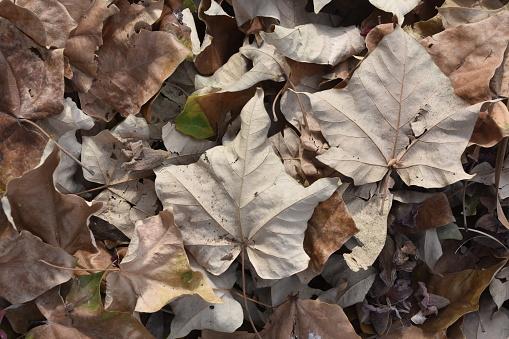 Herfstbladeren Stockfoto en meer beelden van Abstract