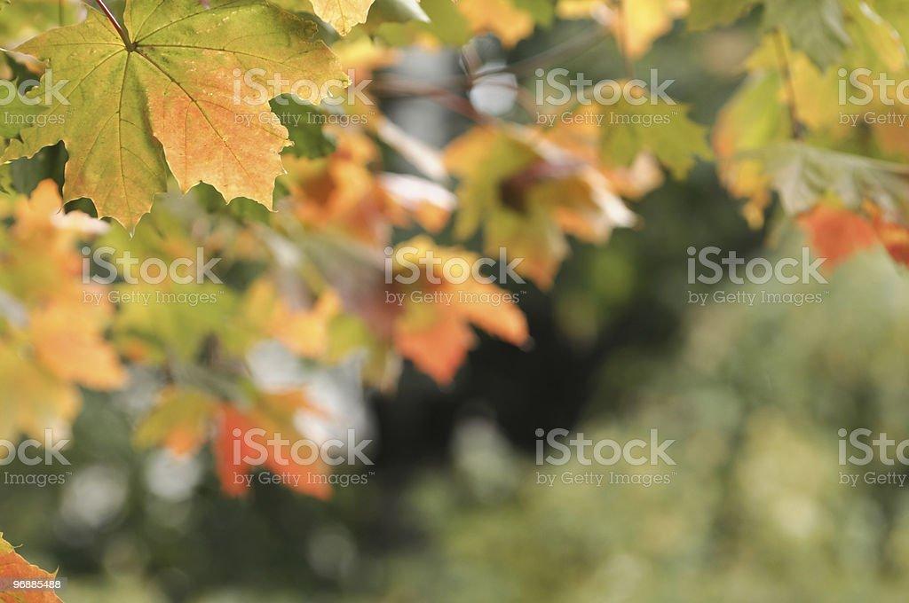 Herbst Blätter. Lizenzfreies stock-foto