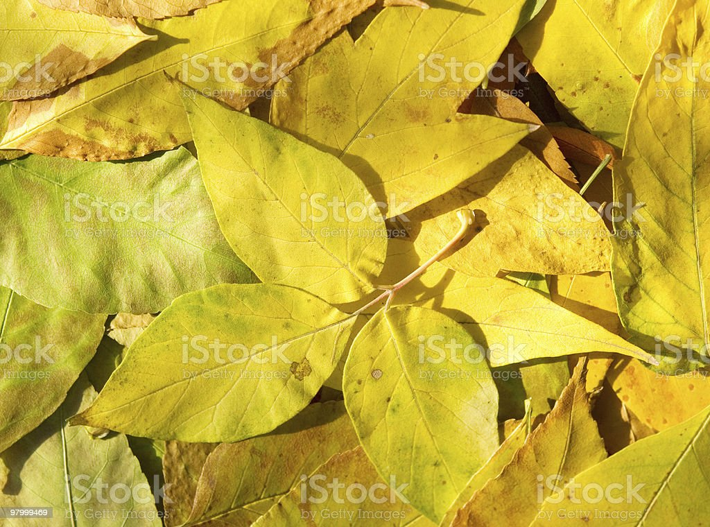 autumn leaves royalty free stockfoto