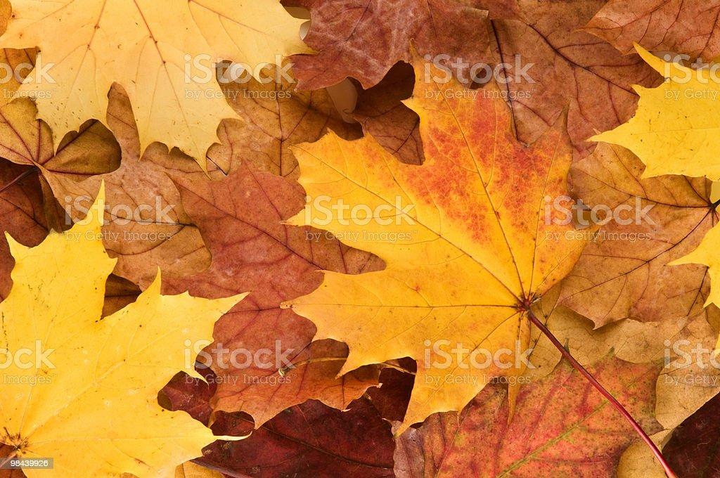 가을 낙엽 royalty-free 스톡 사진