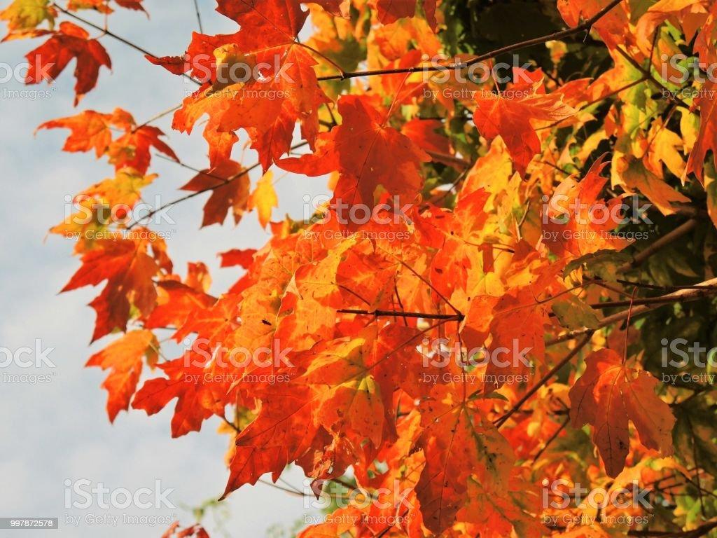 Herbst Blätter. – Foto