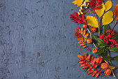 istock Autumn leaves, pumpkin, pine cones and flowers on gray background with copy space 1285540740