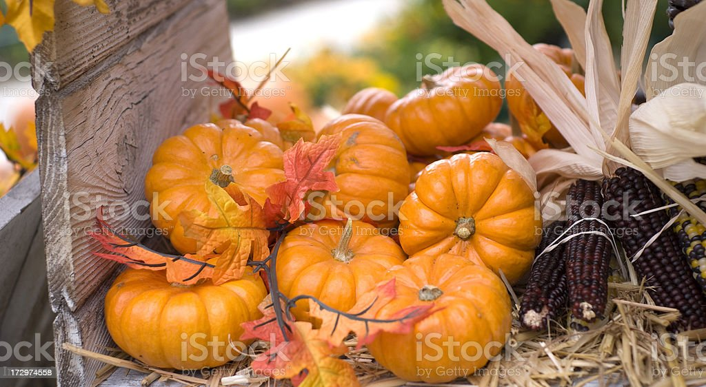Autumn Leaves, Pumpkins, Indian Corn Thanksgiving & Halloween Decorations, Food Background royalty-free stock photo