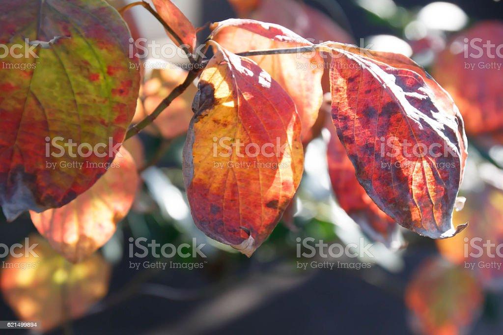 Autumn leaves red leaves photo libre de droits