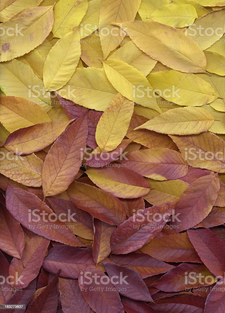 Autumn leaves red orange and yellow gradient background stock photo
