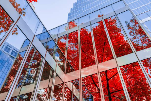herfstbladeren nadenken over kantoorgebouw - vancouver canada stockfoto's en -beelden