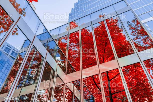 Photo of Autumn leaves reflecting on office building