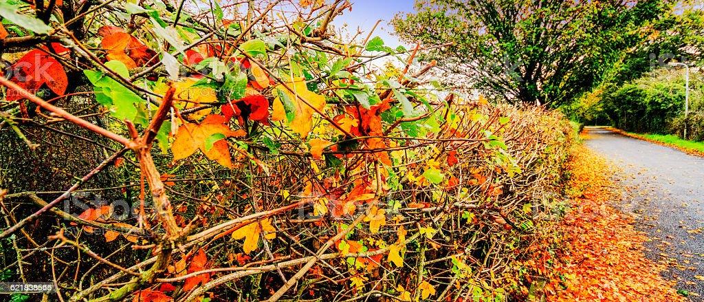 autumn leaves roadside verge stock photo