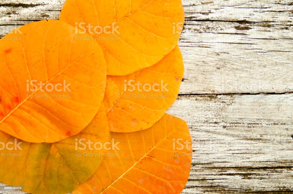 Autumn leaves same color and shape on wooden table. Top view on natural orange leaves with copy space for your text. stock photo