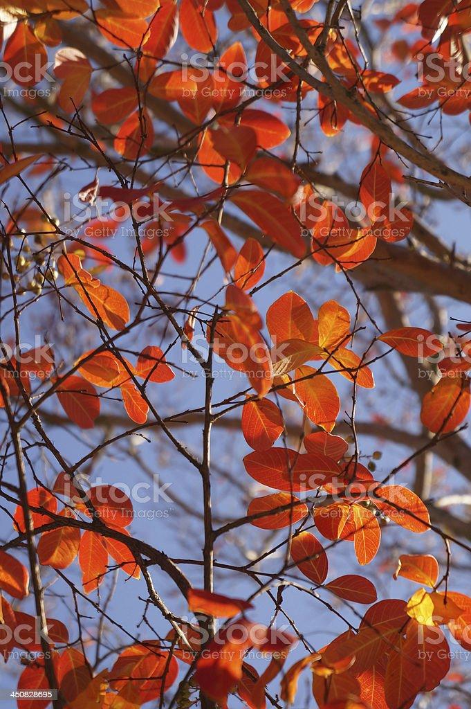 Autumn Leaves - Stock Image royalty-free stock photo