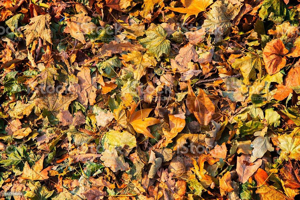 autumn leaves textures background - foto de acervo