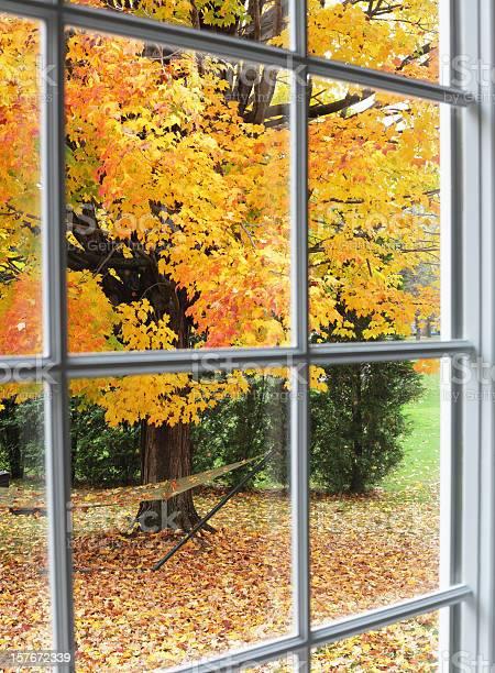 Photo of Autumn Leaves Through Back Yard Bay Window