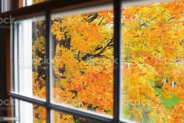 Photo of Autumn Leaves Through Upstairs Window