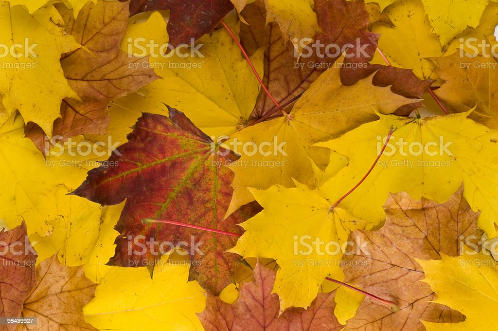 Autunno foglie due foto stock royalty-free