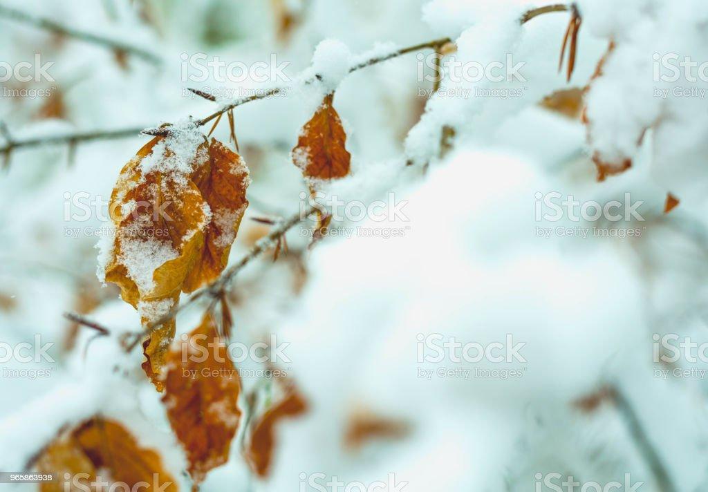 Autumn Leaves Under Snow - Royalty-free Autumn Stock Photo