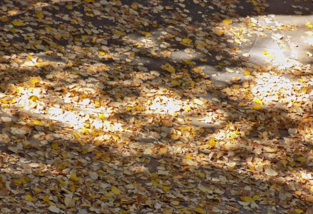 Feuilles d'automne sous la canopée des arbres, au cours de la belle journée ensoleillée - Photo