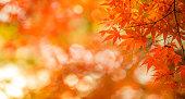 秋の葉、非常に浅いフォーカス