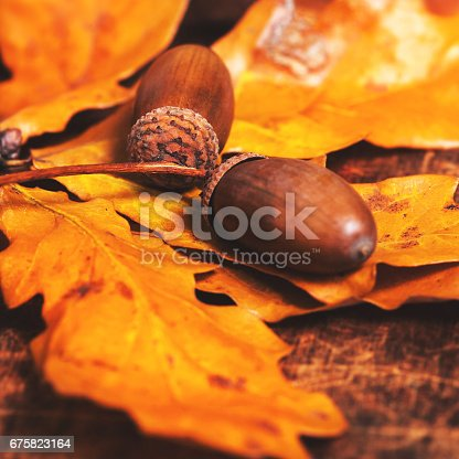 istock Autumn leaves with acorns over wooden background with empty copy space for text.