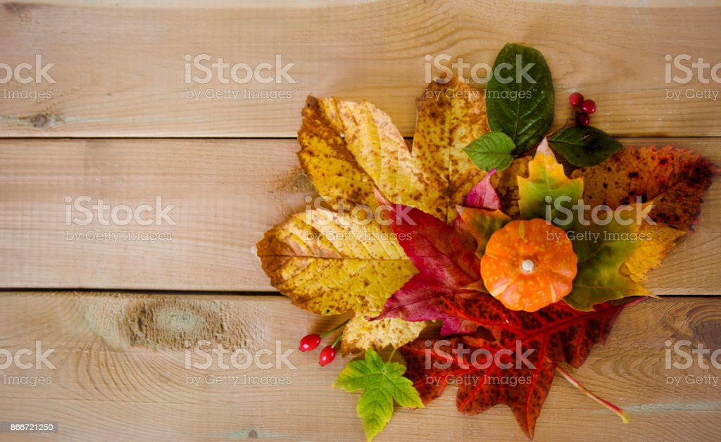 autumn leaves with pumpkins on the table stock photo