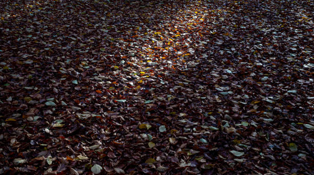 Autumn (Fall) leaves with sunlight stock photo