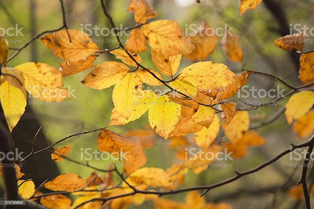Autumn leaves XXXL royalty-free stock photo