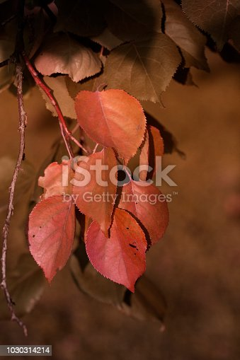 istock Autumn leaves.Autumn yellow leaves on branches. Fall, autumn, leaves background. A tree branch of a yellow leaf on a blurred bokeh. 1030314214