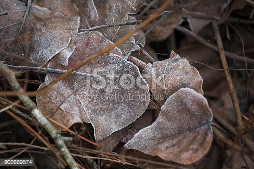 istock Autumn Leaves-Stock image 902669574