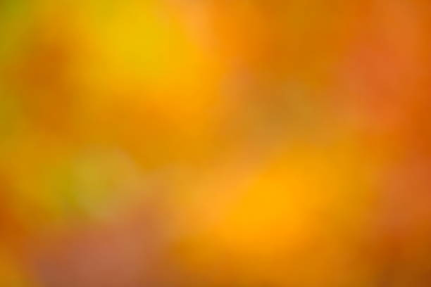 Autumn Light Background Defocused background. fall background stock pictures, royalty-free photos & images
