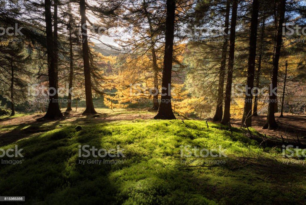 Autumn light Peak District stock photo