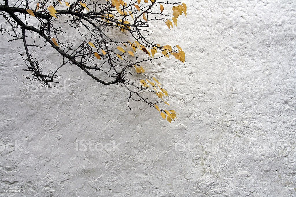 autumn like branchlet infront of a white wall royalty-free stock photo