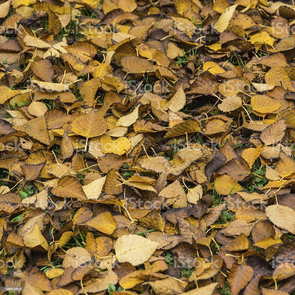 Autumn Litter stock photo