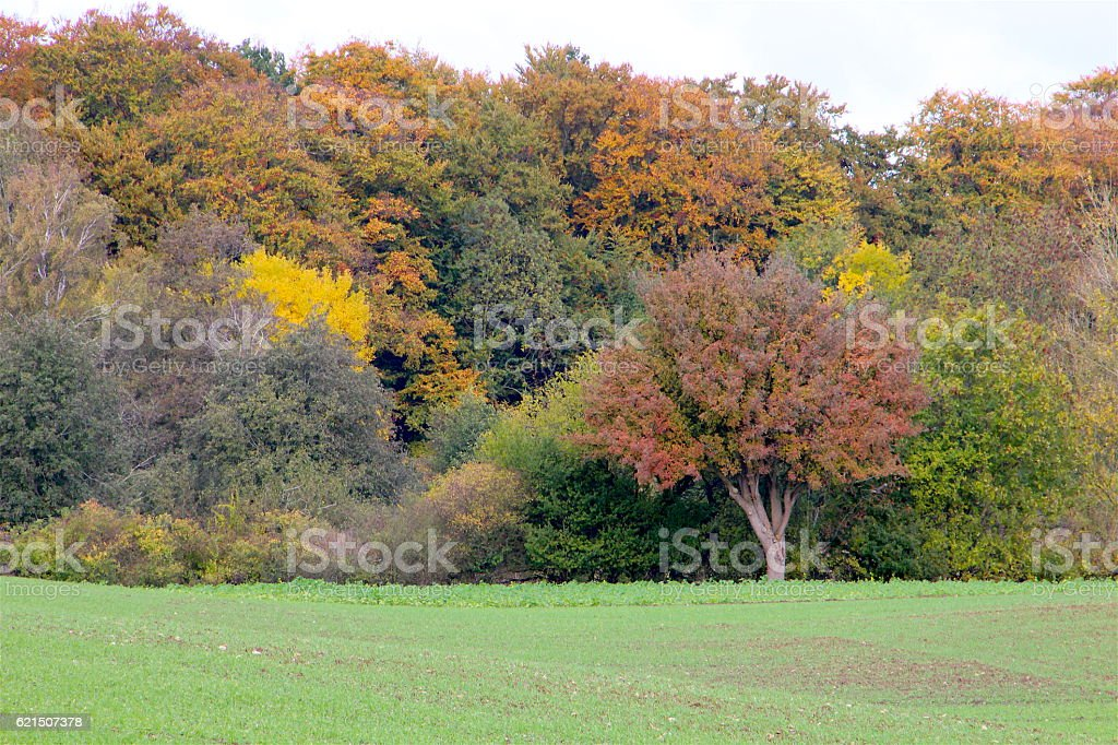 Autumn many colors foto stock royalty-free