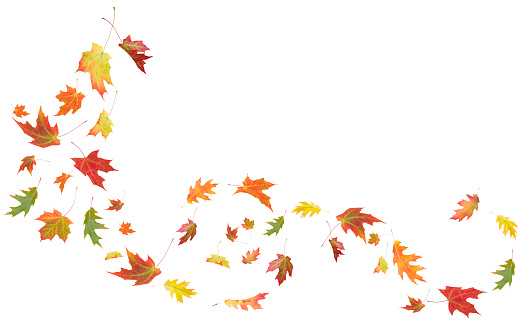 Autumn Maple And Oak Leaves Blowing In The Wind Stock Photo Download Image Now Istock