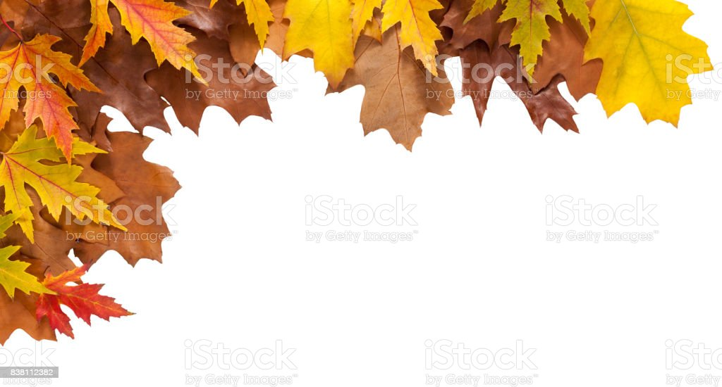 Autumn maple and oak leaves isolated on white background - foto stock