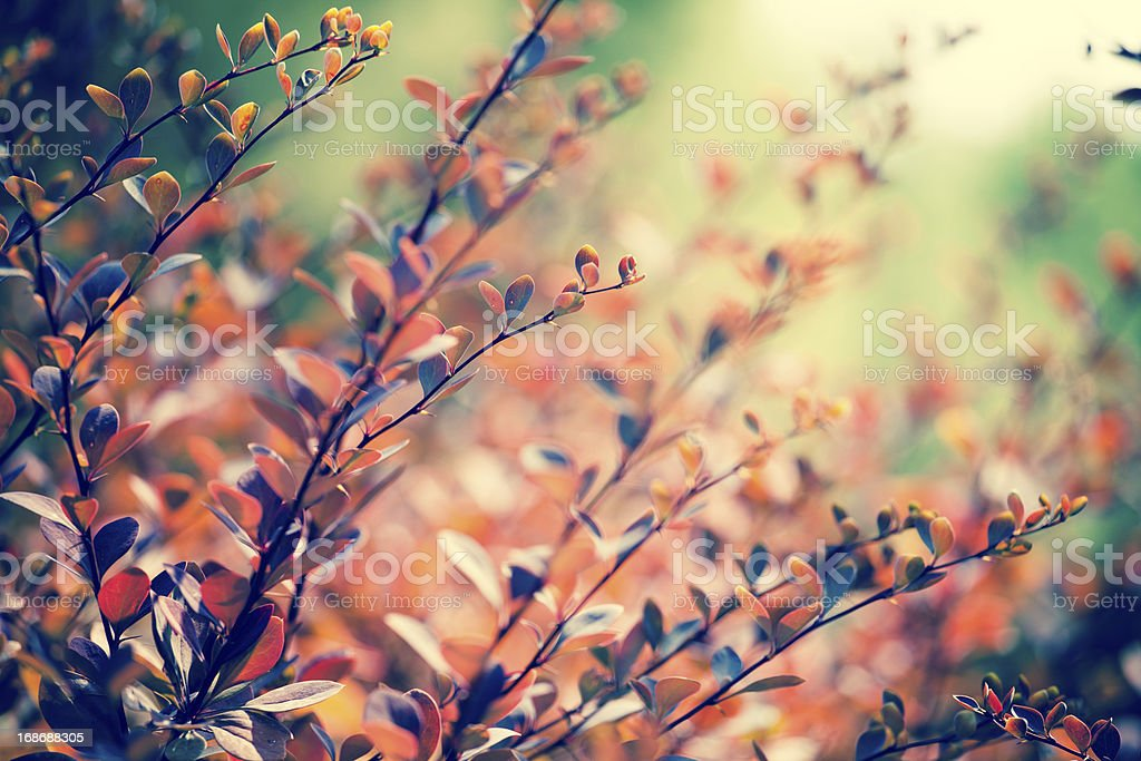 autumn maple leaf on leaves background royalty-free stock photo