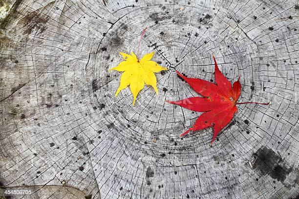 Photo of autumn maple leaf