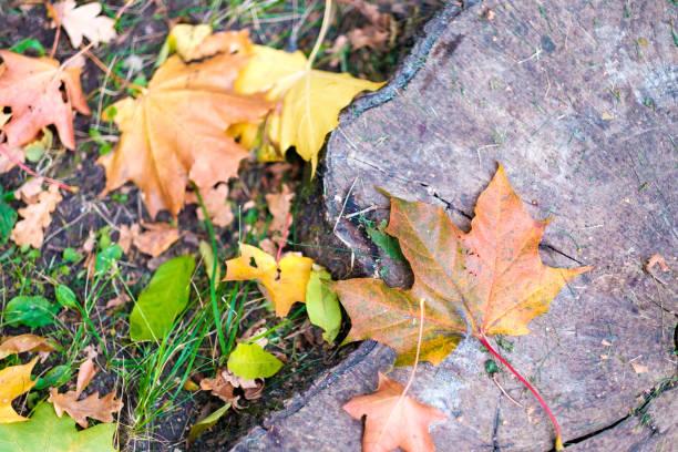 추절 단풍 잎  스톡 사진