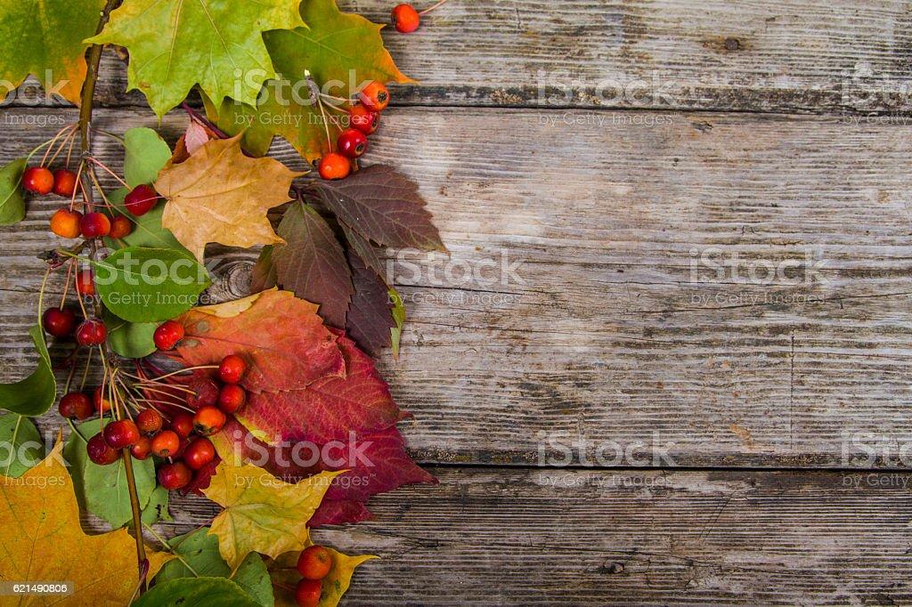 Feuilles d'érable automne et pommes photo libre de droits