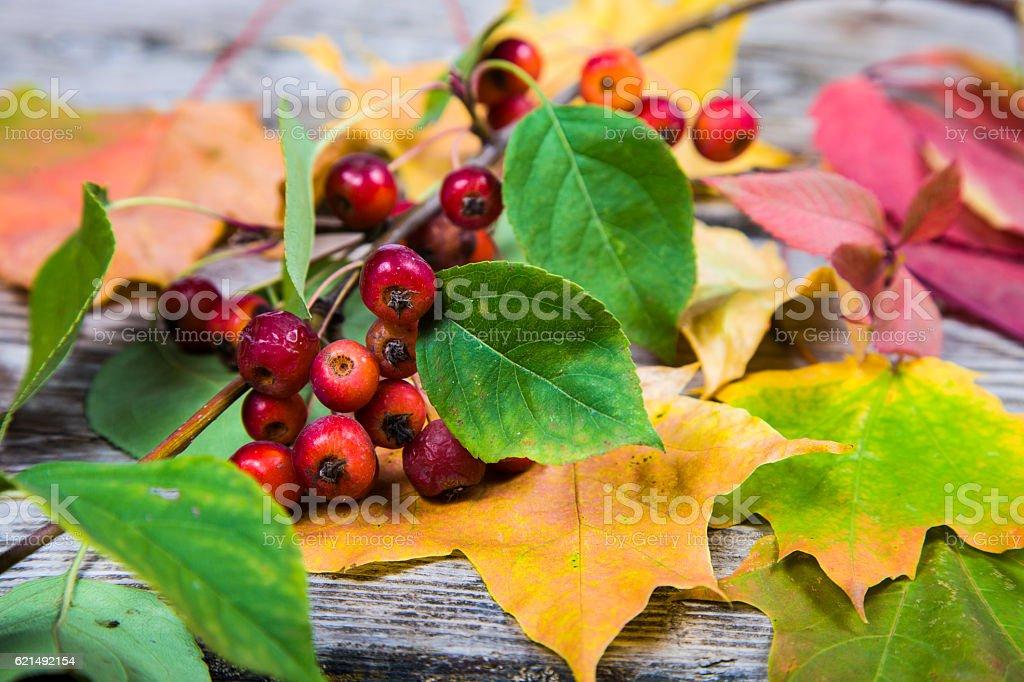 Herbst Ahorn Blätter und Äpfeln Lizenzfreies stock-foto