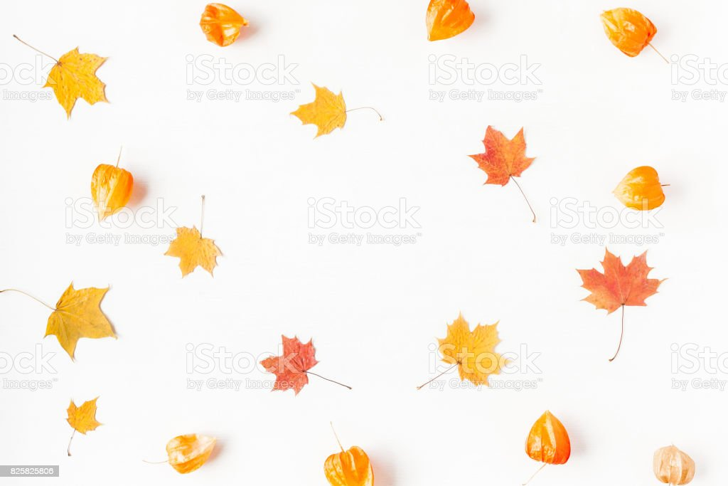 Autumn maple leaves and physalis flowers. Flat lay, top view stock photo