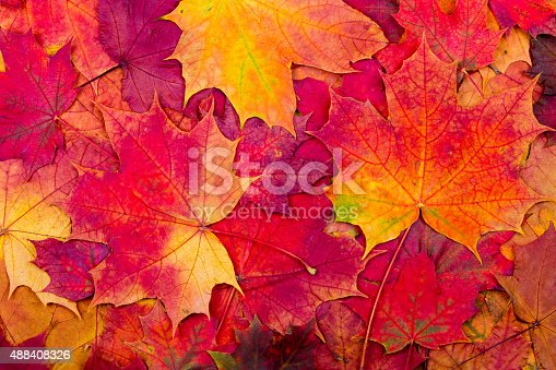 istock Autumn maple leaves background 488408326