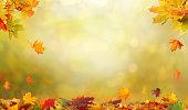 秋のカエデを葉します。落下葉の自然な背景。