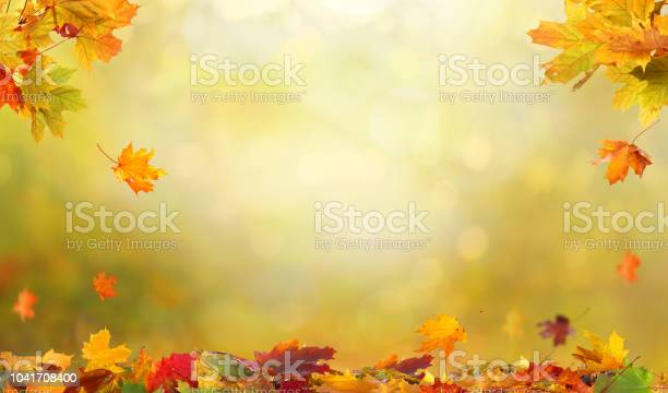 Autumn maple leaves falling leaves natural background picture id1041708400?b=1&k=6&m=1041708400&s=612x612&h=wlaqb8qo205rlaryh cccxssthajfh7vub8kefcfnre=