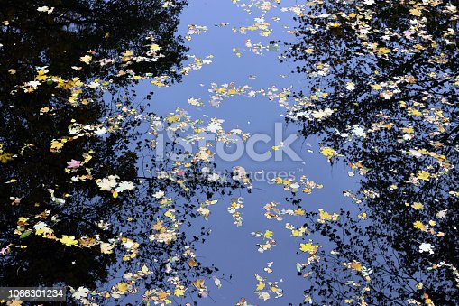 istock Autumn maple leaves in puddle of water. Puddle water autumn maple leaves. 1066301234