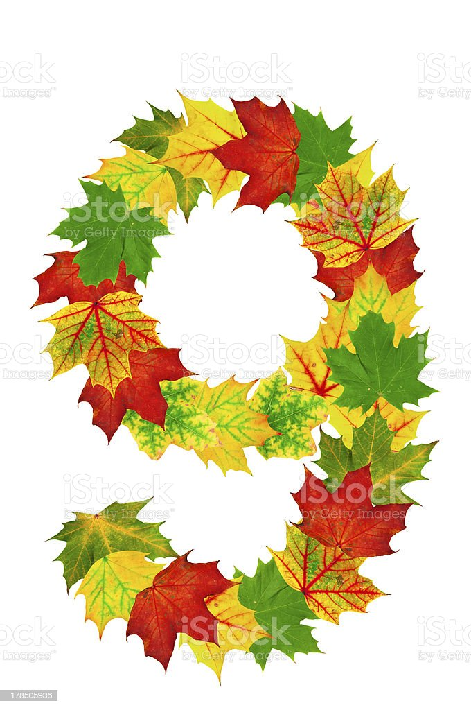 Autumn maple Leaves in the shape of number 9 stock photo