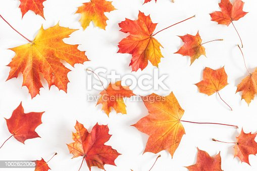 istock Autumn maple leaves on white background. Flat lay, top view 1002622008